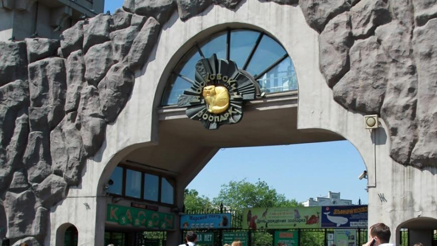 Московский зоопарк победил в конкурсе идей сохранения природы