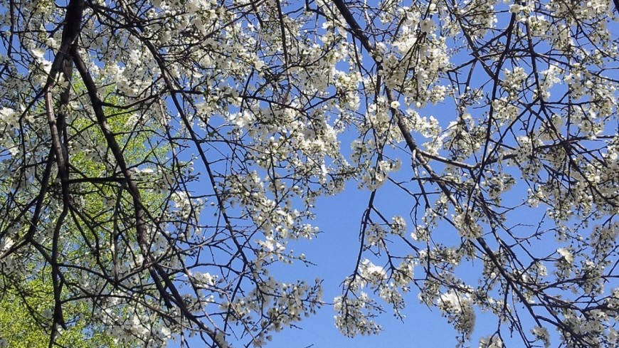 Вильфанд рассказал о приближающейся весне в Москве