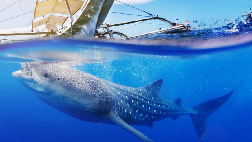 Британец трюком из фильма «Челюсти» отбился от акулы