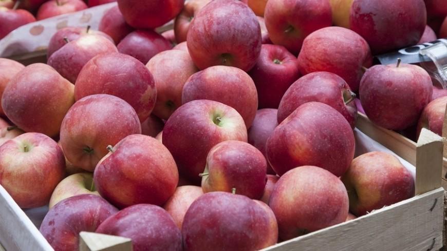 Яблоки на индийских прилавках скоро могут стать молдавскими