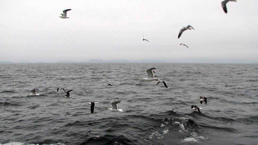 "© Фото: ""Елизавета Шагалова, «Мир 24»"":http://mir24.tv/, чайки, белое море, море"