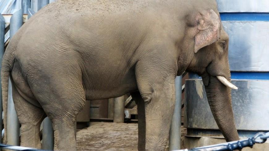 "Фото: Елизавета Шагалова, ""«МИР 24»"":http://mir24.tv/, слон"