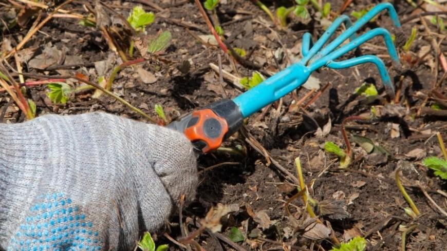 Приметы на 19 июня: можно полоть сорняки на огороде