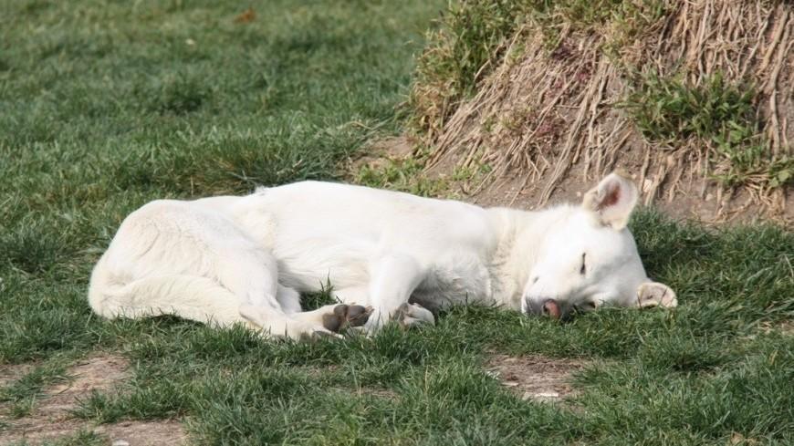 В собачьих консервах обнаружили средство для эвтаназии