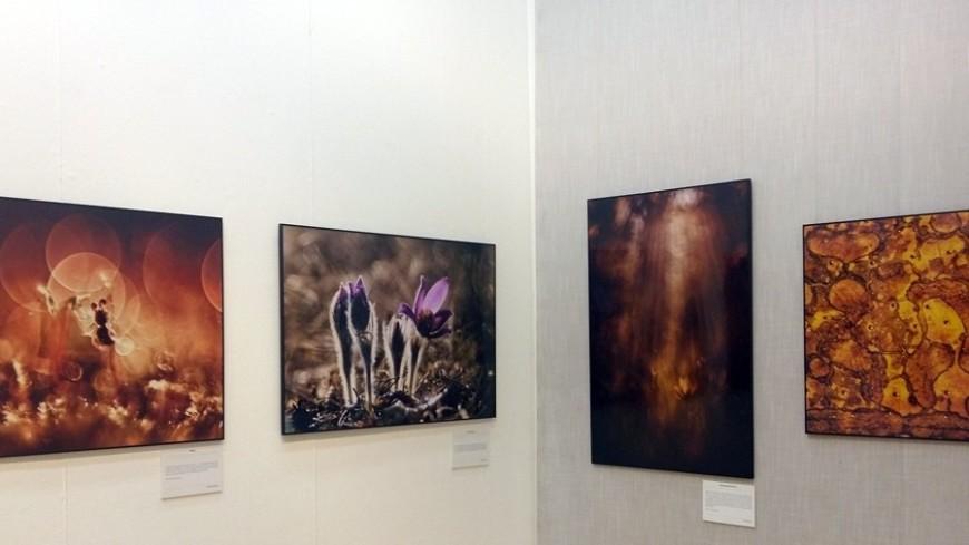 """""""© Фото: Дарья Никишина, «МИР 24»"""":http://mir24.tv/, выставка, картины"""