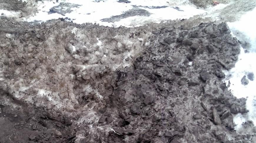Раскрыта тайна «кровавого» снега из Архангельской области