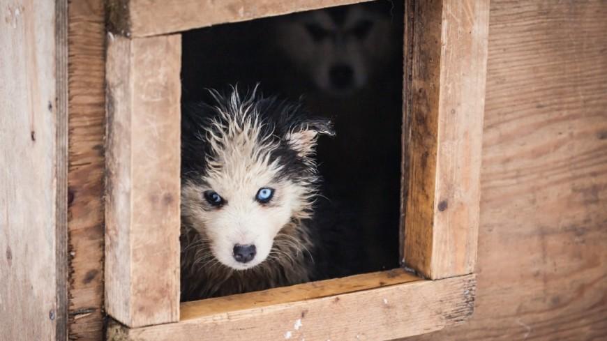 Кто за кого в ответе: Москва и ее бездомные собаки