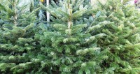 Москвичи сдали за неделю три тысячи елок на утилизацию