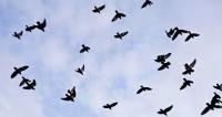 Огромная птица вмешалась в прогноз погоды на американском ТВ