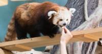 Московский зоопарк оборудую камерами видеонаблюдения