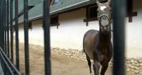 Лошадь Макрона поместили на карантин в Китае