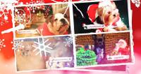 Живой символ года: талантливые собаки украсили новогодний эфир «Мира»