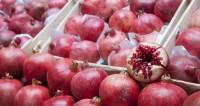 Рубиновый фрукт: Азербайджан – гранатовый рай