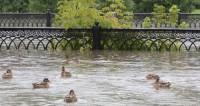 Грузинская «Венеция»: ливни затопили десятки сел