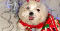 «Собака-улыбака»: мимимишный песик развеселил «МИР»
