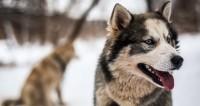 Собачий бизнес: как организовать питомник