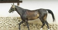 На лошадях через огонь: в Испании прошел фестиваль «Люминариас»