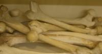 Жителя Невинномыска поймали в аэропорту с 10 кг костей мамонта