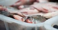 Обзор прессы: рыба скоро снова подорожает