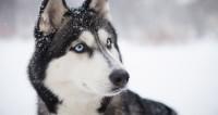 Сколько стоит собака в год Собаки