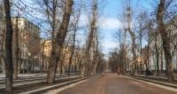 Январское тепло: в Беларуси появились грибы и шакалы