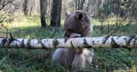 Медведи не впали в спячку в Кавказском заповеднике из-за тепла