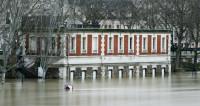 Парижские улицы заполнили бегущие от потопа крысы