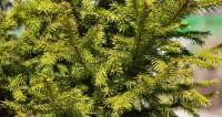Вторая жизнь новогодней елки: корм, мыло и эксклюзивный сувенир