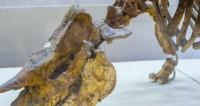 Российские ученые описали новый род динозавров: сибиротитан