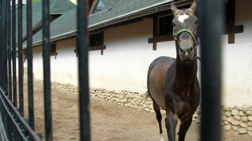 Лошадь, лошадь