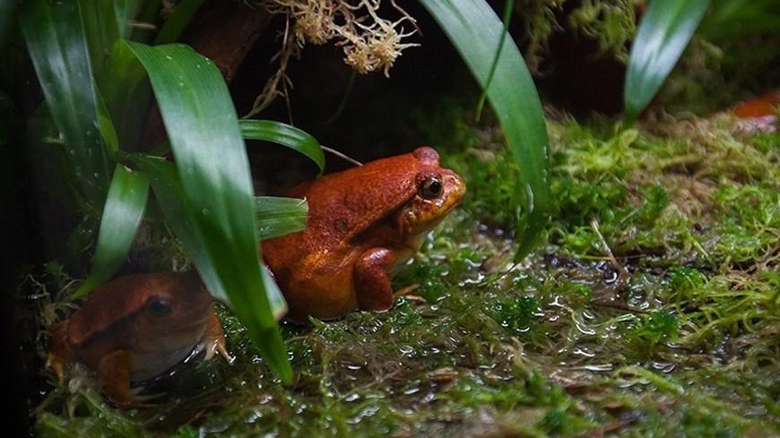 Биологи назвали лягушку в честь Стэнли Кубрика