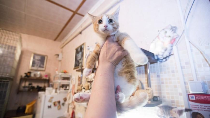 Потерявшийся котенок вернулся к своей хозяйке на поезде