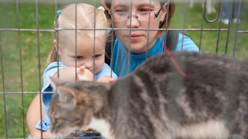 Жители Бийска забрали десятки собак и кошек после пожара в приюте