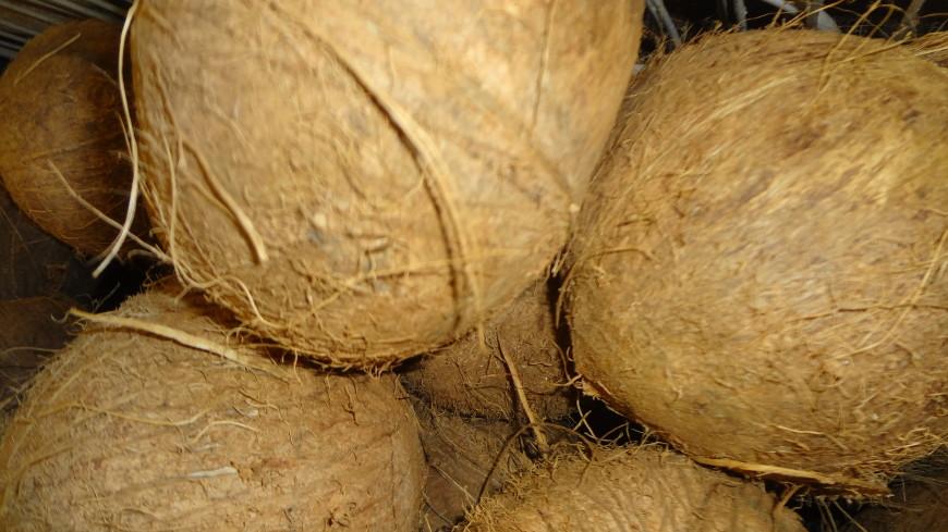 Кокосовый ГОСТ: новый стандарт для орехов