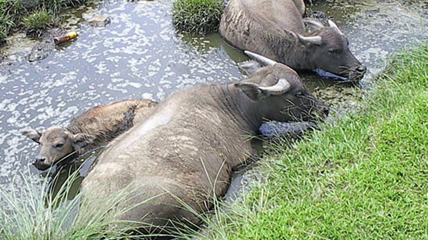 Буйволы отбили слоненка у львов в нацпарке ЮАР