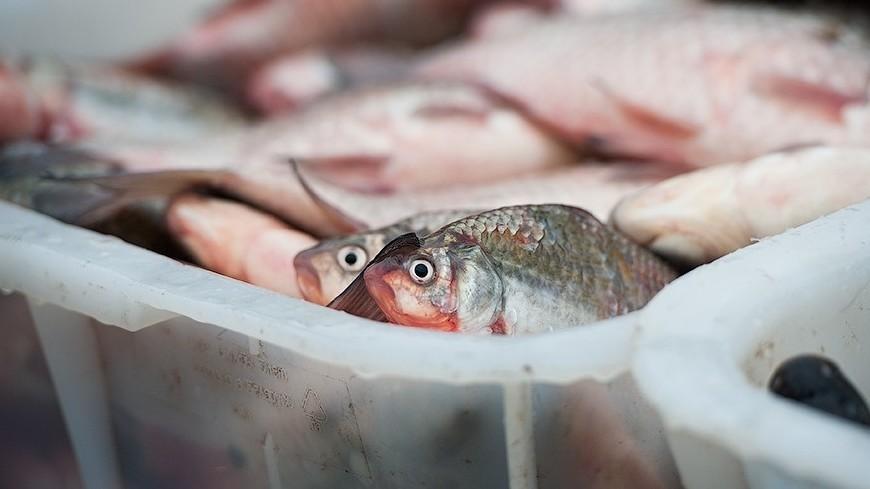 "©  Фото: Анна Тимошенко / ""«МИР 24»"":http://mir24.tv/, рыба"