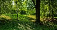 "Фото: Марина Дыкун (МТРК «Мир») ""«Мир 24»"":http://mir24.tv/, утро, санкт-петербург, питер, парк, петергоф, лес, деревья"