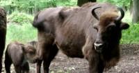 Футбольные животные: игроки сборной России обрели зверских тезок