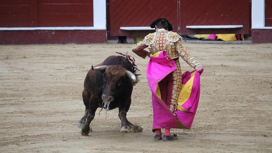 Матадор, которому бык снял скальп, планирует вернуться на корриду