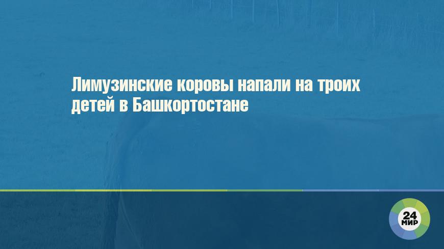 Лимузинские коровы напали на троих детей в Башкортостане