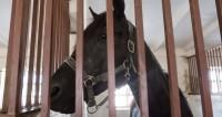 В Баку стартовал Национальный фестиваль конного спорта