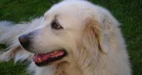 В американском городе пса-мэра отправили на почетную пенсию