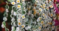 Парад цветов в Петербурге украсили «мяч будущего» и кот Ахилл в карете