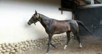 Обнаружен метод «считывания» человеческих эмоций лошадьми