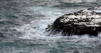 Природная аномалия: на Сахалине массово погибла сельдь