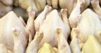 Миллионы яиц: Таджикистан сделал ставку на своих кур-несушек и не прогадал
