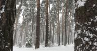 Как снег на голову: в России в первый день лета повеяло зимой