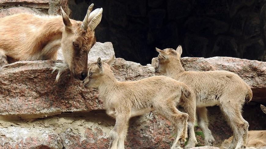 В Московском зоопарке начался бэби-бум