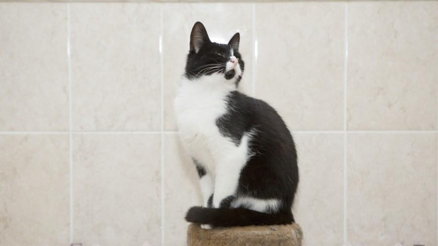 Мини-гостиница «Кошачий ковчег» и приют «Кошкин Дом»,кошка, кот, кошачий приют, ,кошка, кот, кошачий приют,
