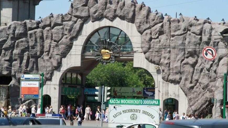 Московский зоопарк закроют в субботу из-за непогоды